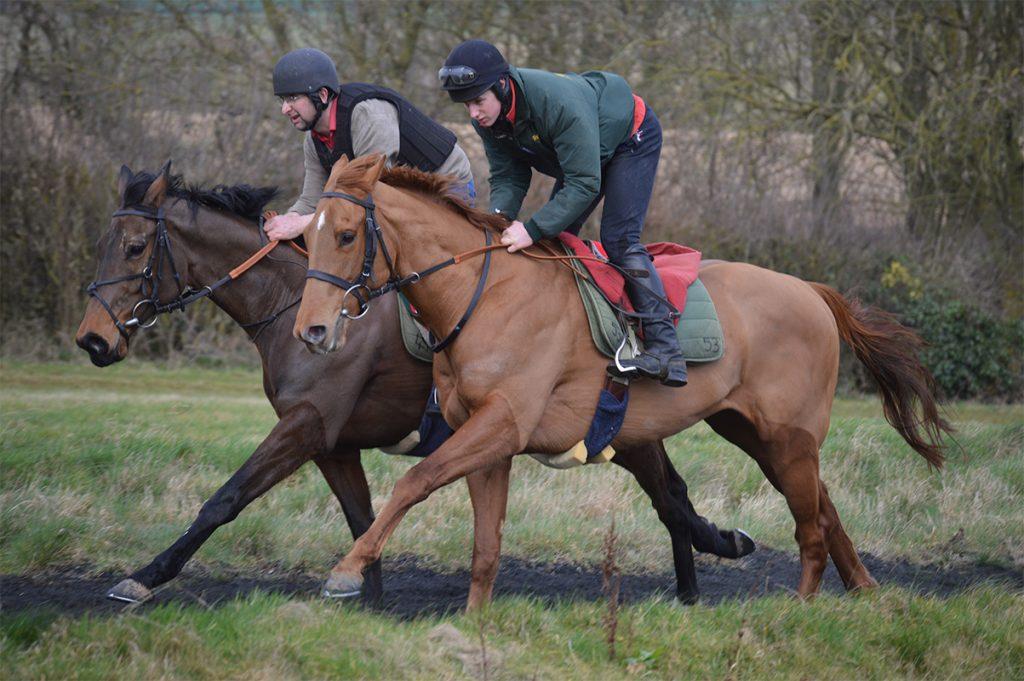 Lord Marmaduke   Horses for Sale   Paul Webber Racing